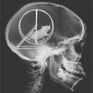 cervello con criceto